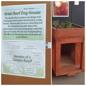 Green roof dog house project